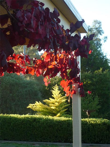 maria-coyle-sculpture-garden